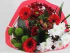 mini_promo-rood-roos