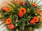 roos-groot-oranje